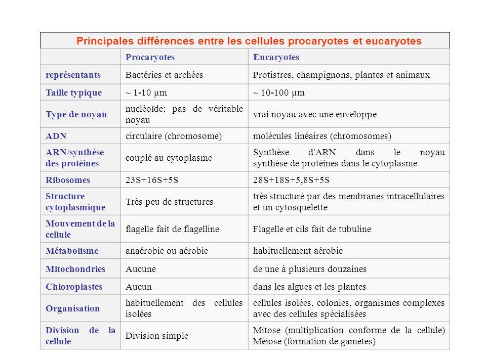 ProcaryotesEucaryotes représentantsBactéries et archéesProtistres, champignons, plantes et animaux Taille typique~ 1-10 µm~ 10-100 µm Type de noyau nu