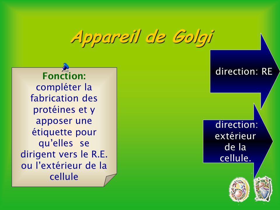 Appareil de Golgi èEmpilement de 6 ou 7 dictyosomes Quantité 10 à 20 par cellule animale.Quantité plusieurs centaines par cellule végétale.