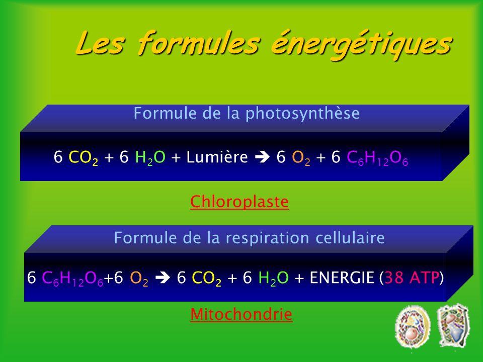 mitochondrie lysosome chloroplaste