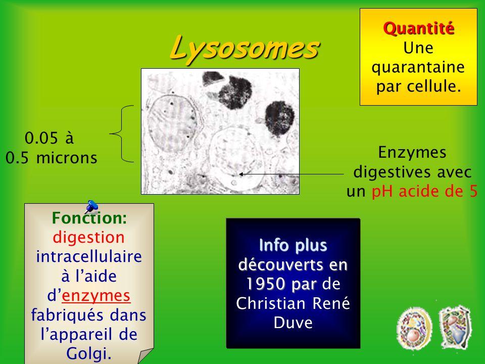 Fonction: faire de la photosynthèse, cest à dire transformer lénergie lumineuse en énergie chimique, glucose. Info plus Les chloroplastes se reproduis