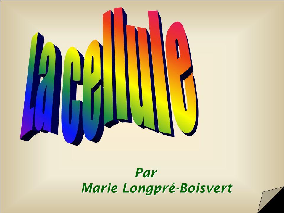 Par Marie Longpré-Boisvert École La Dauversière, Montréal, juin 2000 Validation du contenu et révision linguistique: Karine LefevbreKarine Lefevbre Science animée, 2000 Cliquez ici pour commencer