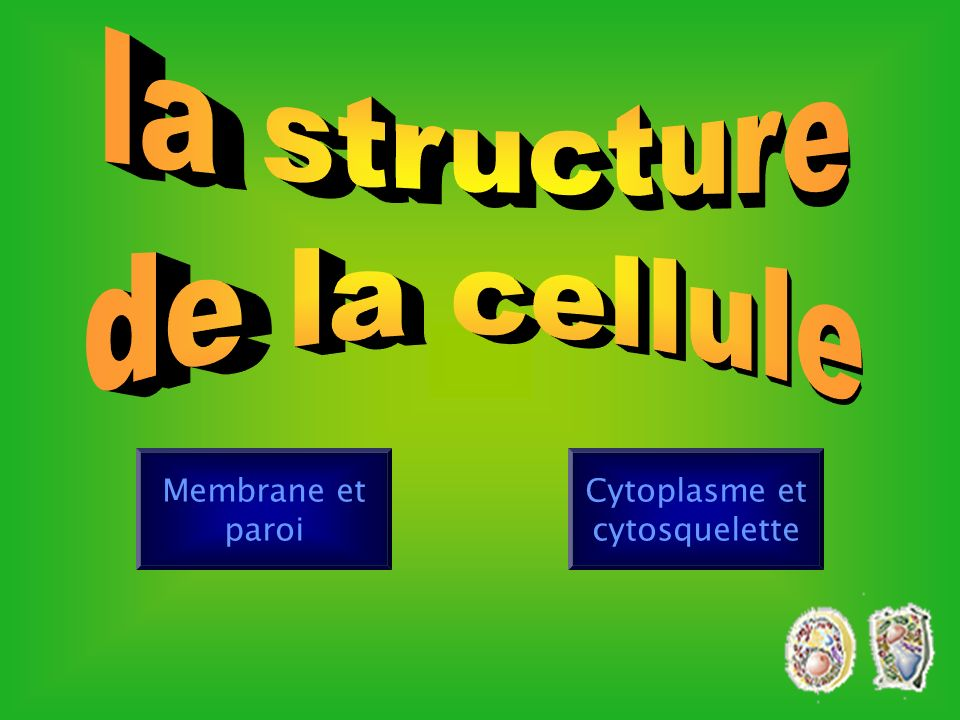 Lysosomes 0.05 à 0.5 microns Enzymes digestives avec un pH acide de 5 Quantité Une quarantaine par cellule.