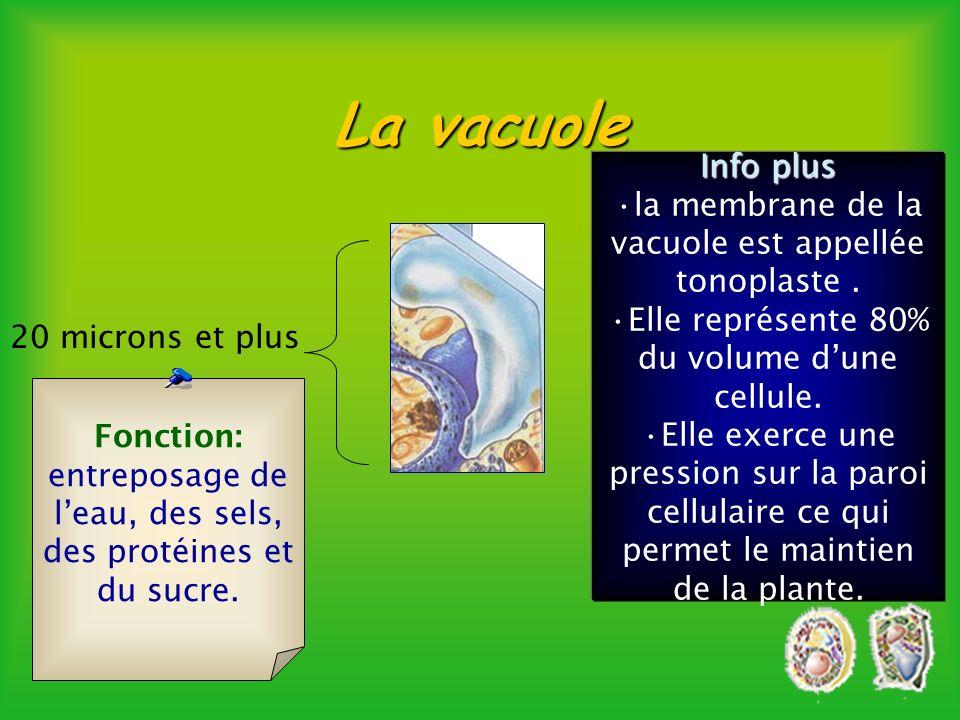 Cytosquelette Le cytosquelette est un assemblage de différentes structures qui voient au maintien de la cellule.