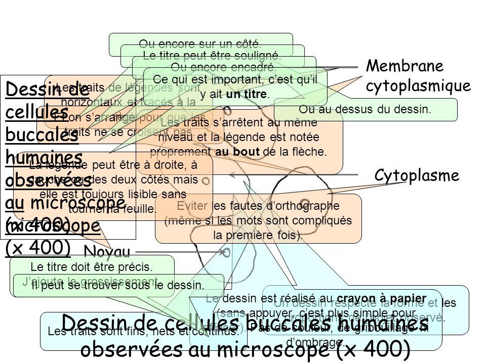 Membrane cytoplasmique Un dessin respecte la forme et les proportions de lobjet observé. Le dessin est réalisé au crayon à papier (sans appuyer, cest