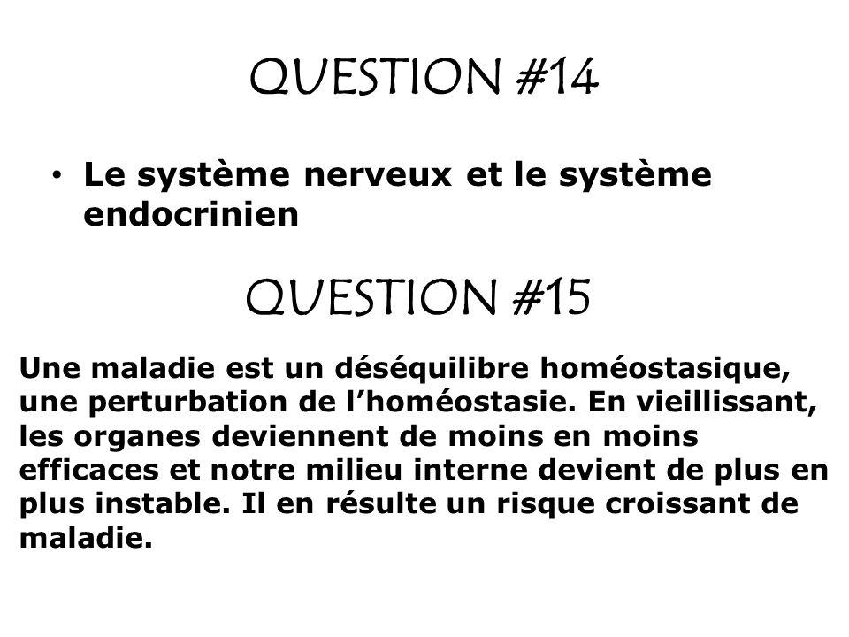 QUESTION #14 QUESTION #15 Le système nerveux et le système endocrinien Une maladie est un déséquilibre homéostasique, une perturbation de lhoméostasie