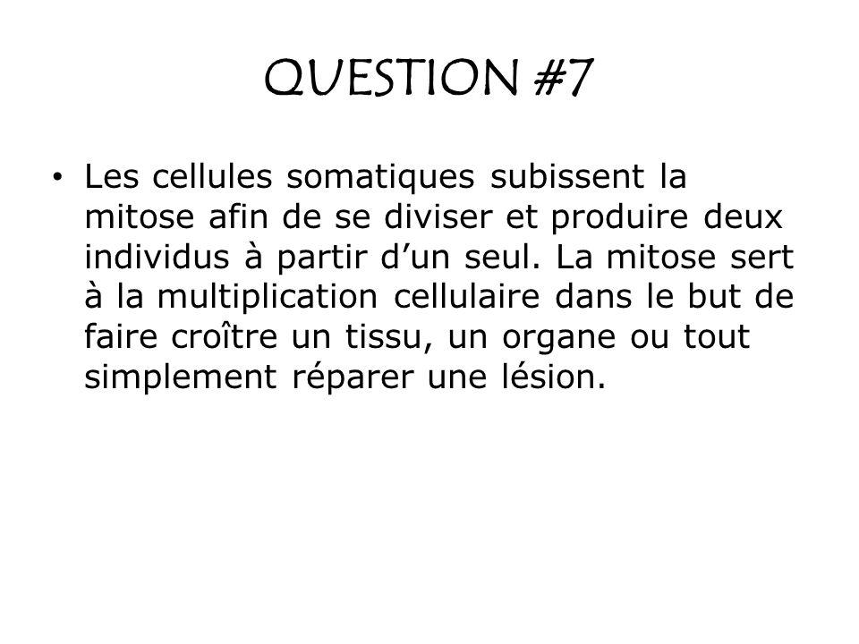 QUESTION #7 Les cellules somatiques subissent la mitose afin de se diviser et produire deux individus à partir dun seul. La mitose sert à la multiplic