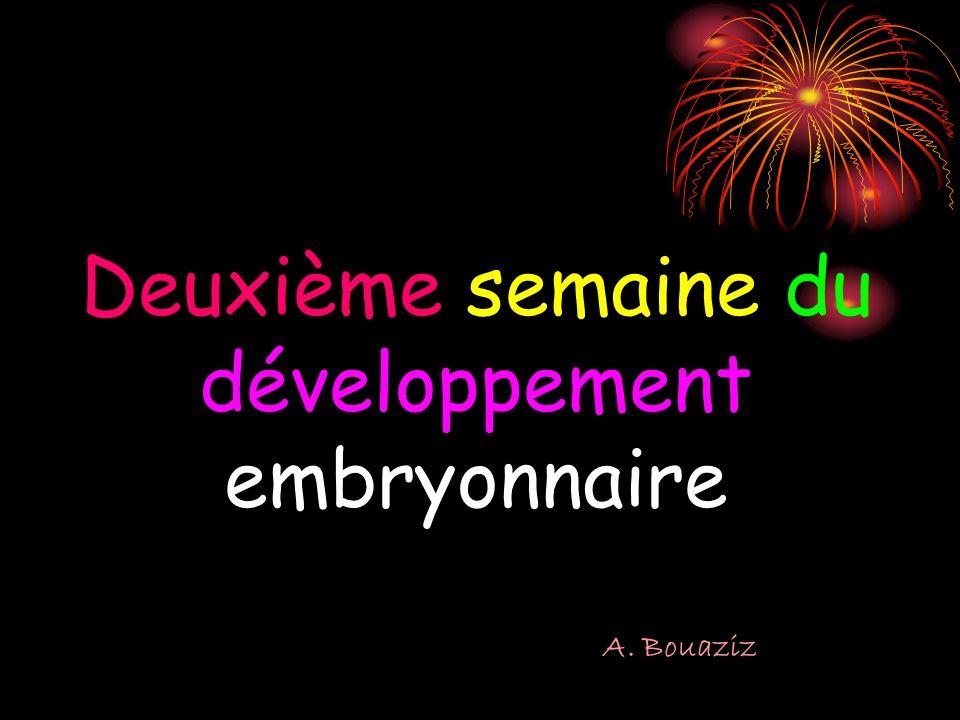 Deuxième semaine du développement embryonnaire A. Bouaziz