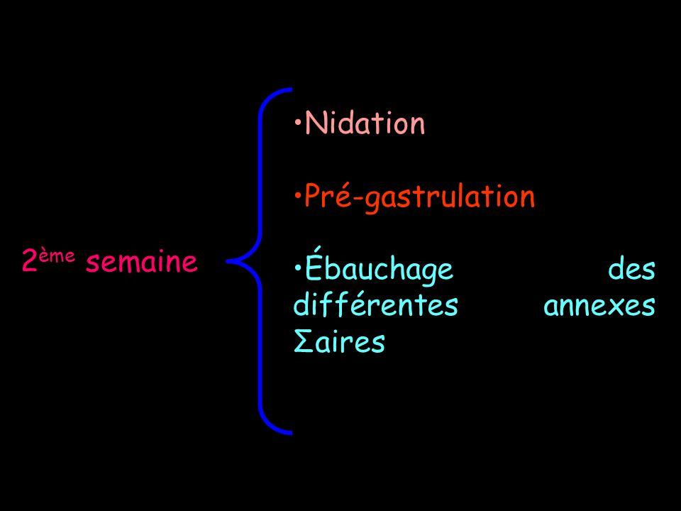 2 ème semaine Nidation Pré-gastrulation Ébauchage des différentes annexes Σaires