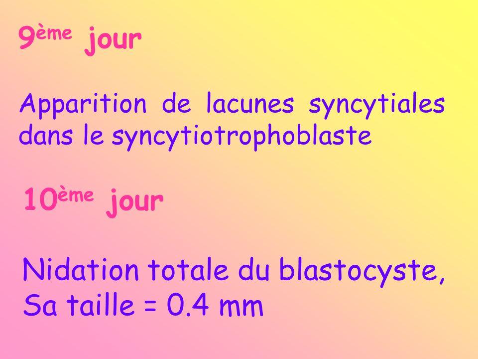 L.S. L.I aire Membrane de Heuser Mésenchyme Caillot de fibrine Embryon humain de 10 jours C.F.E.