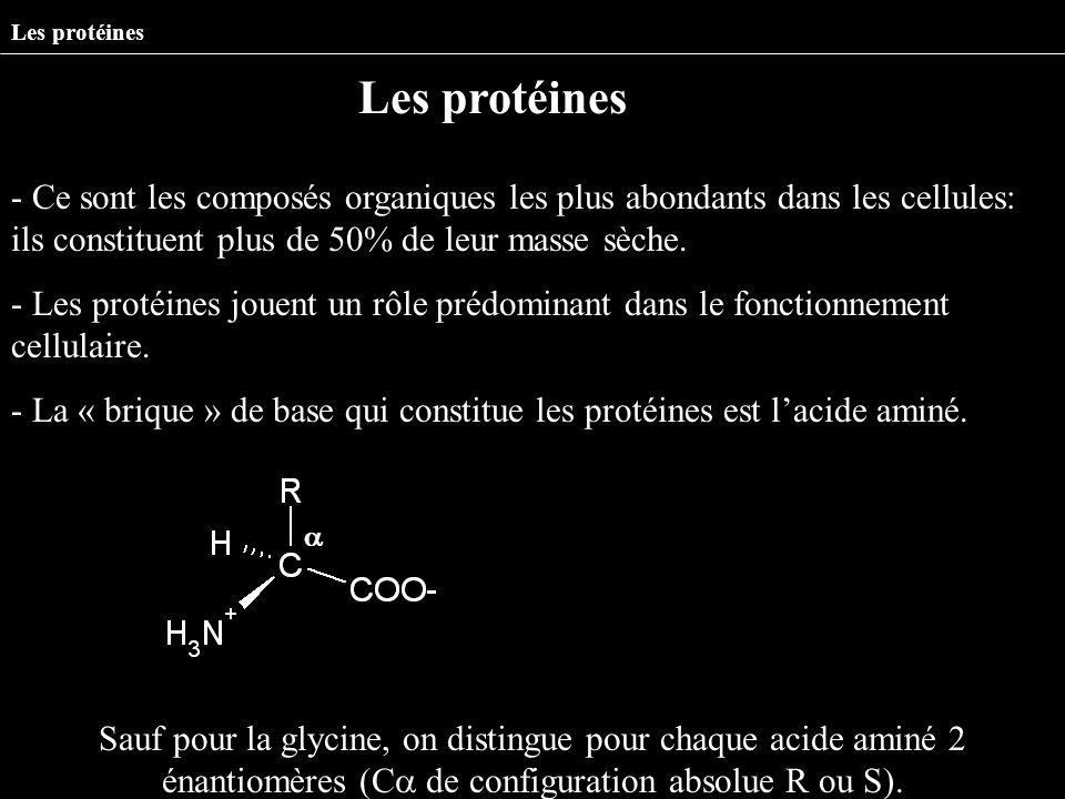 - Ce sont les composés organiques les plus abondants dans les cellules: ils constituent plus de 50% de leur masse sèche. - Les protéines jouent un rôl