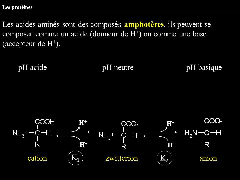 Les protéines Les acides aminés sont des composés amphotères, ils peuvent se composer comme un acide (donneur de H + ) ou comme une base (accepteur de
