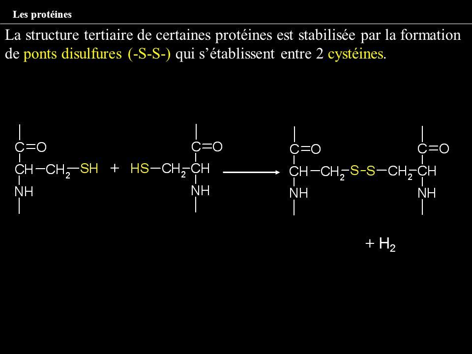 La structure tertiaire de certaines protéines est stabilisée par la formation de ponts disulfures (-S-S-) qui sétablissent entre 2 cystéines. + + H2+