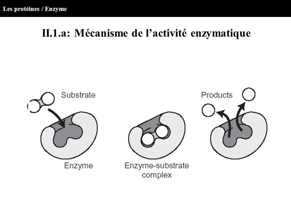 II.1.a: Mécanisme de lactivité enzymatique Les protéines / Enzyme