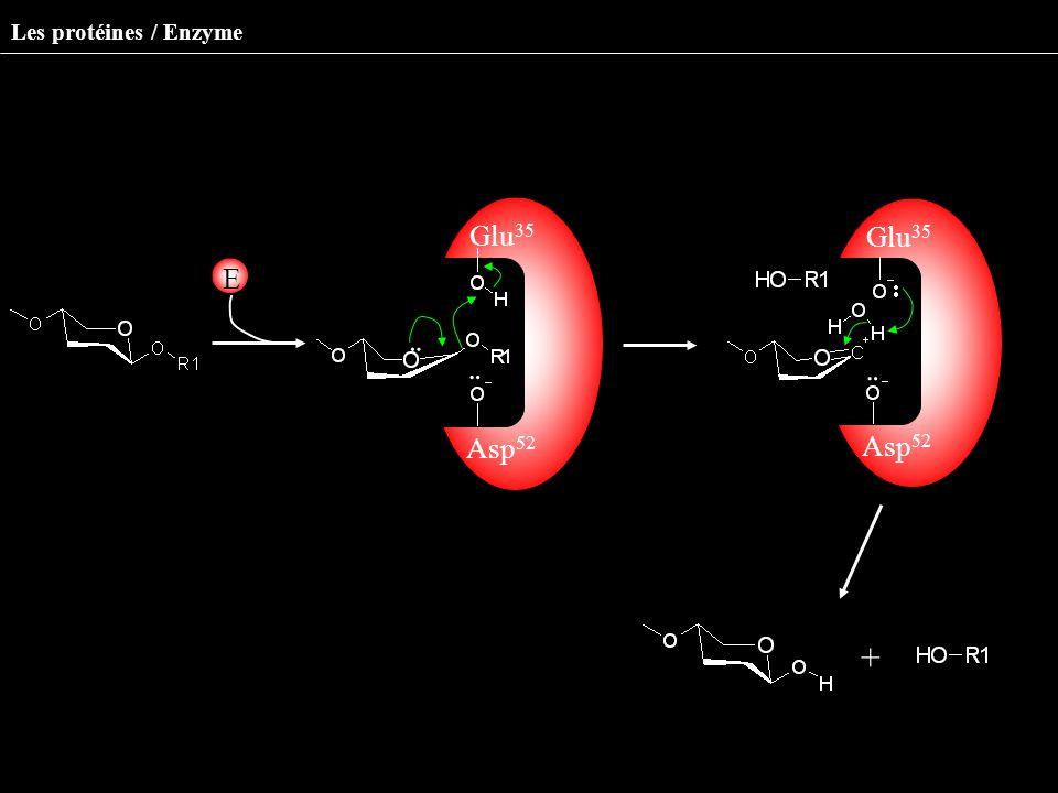 Les protéines / Enzyme Milieu environnan t ¨ Asp 52 Glu 35 ¨ ¨ Asp 52 Glu 35 ¨ E +