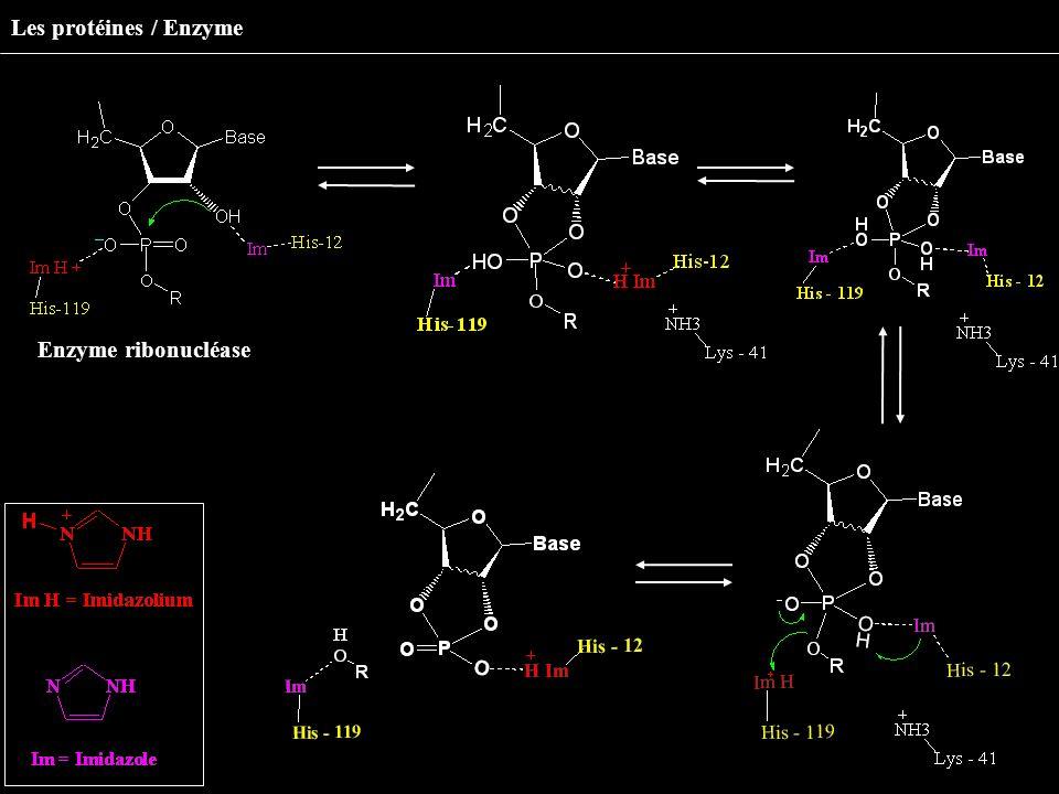 Enzyme ribonucléase