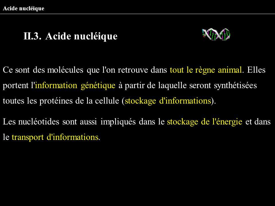 Ce sont des molécules que l'on retrouve dans tout le règne animal. Elles portent l'information génétique à partir de laquelle seront synthétisées tout