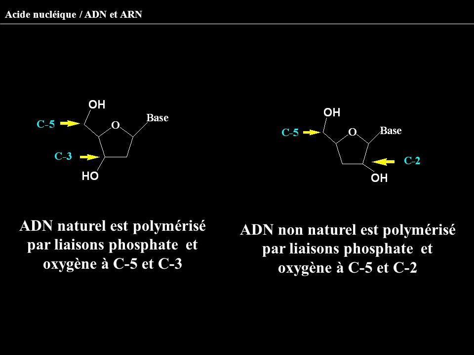 ADN naturel est polymérisé par liaisons phosphate et oxygène à C-5 et C-3 ADN non naturel est polymérisé par liaisons phosphate et oxygène à C-5 et C-