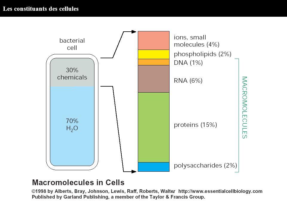 Les constituants des cellules