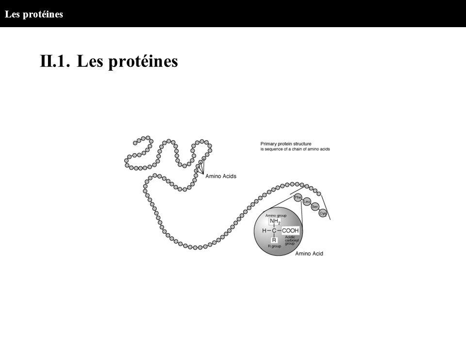 II.1. Les protéines Les protéines