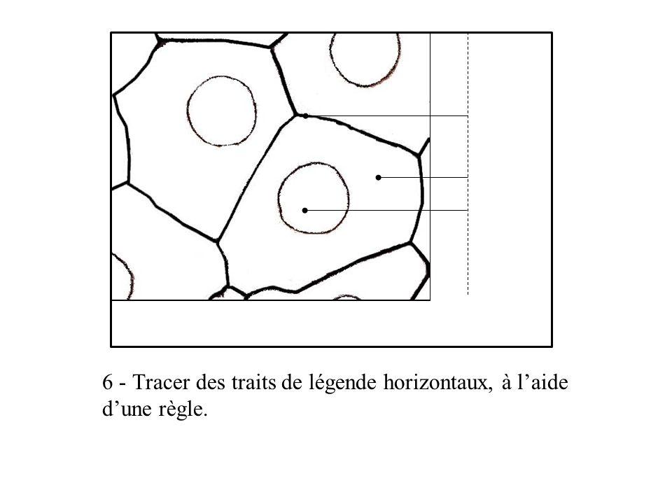 6 - Tracer des traits de légende horizontaux, à laide dune règle.