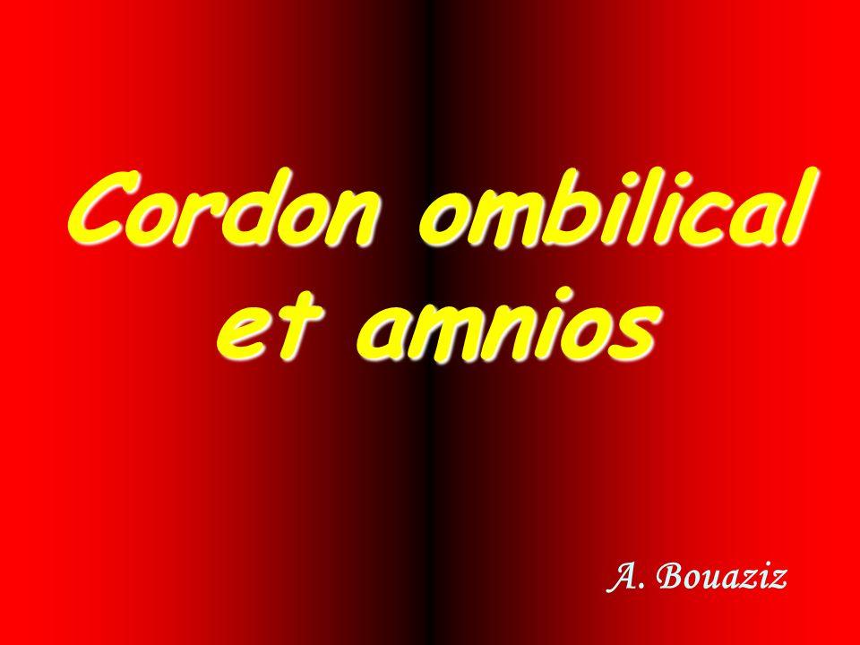 Cordon ombilical et amnios A. Bouaziz