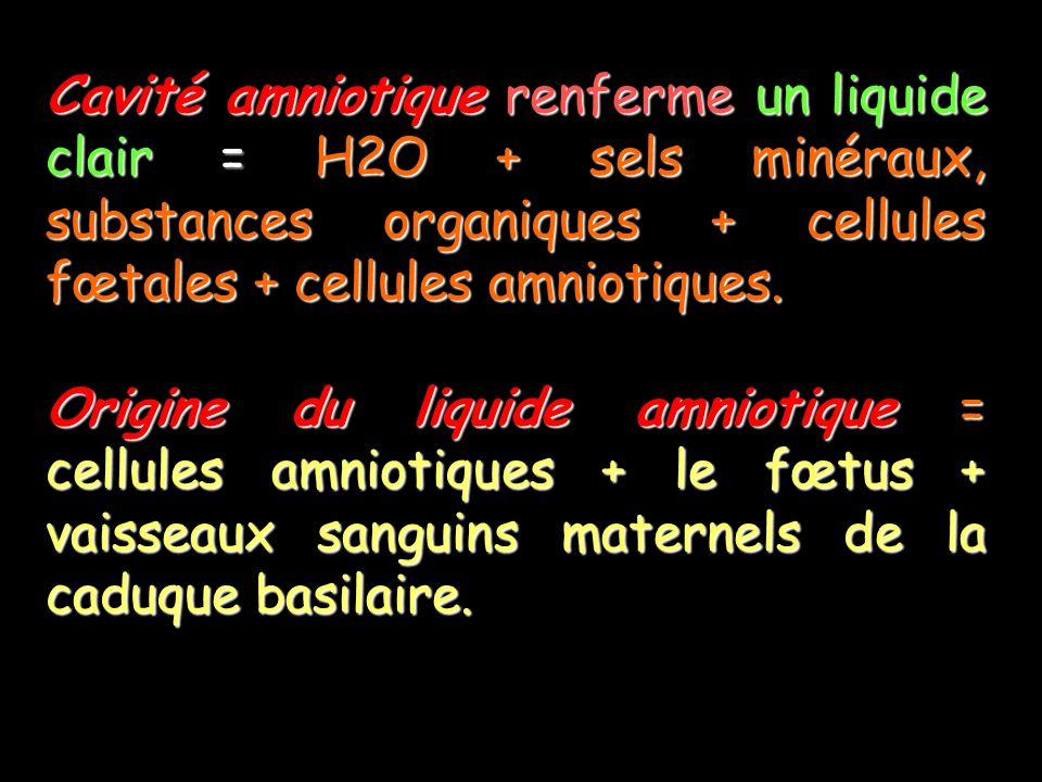 Cavité amniotique renferme un liquide clair = H2O + sels minéraux, substances organiques + cellules fœtales + cellules amniotiques.