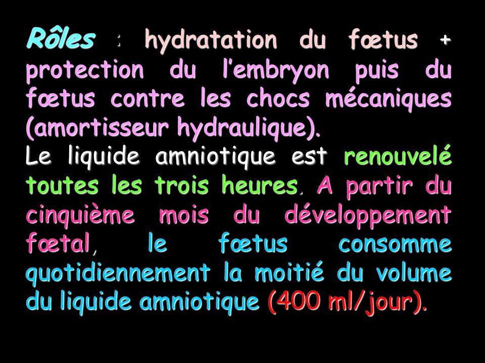 Rôles : hydratation du fœtus + protection du lembryon puis du fœtus contre les chocs mécaniques (amortisseur hydraulique).