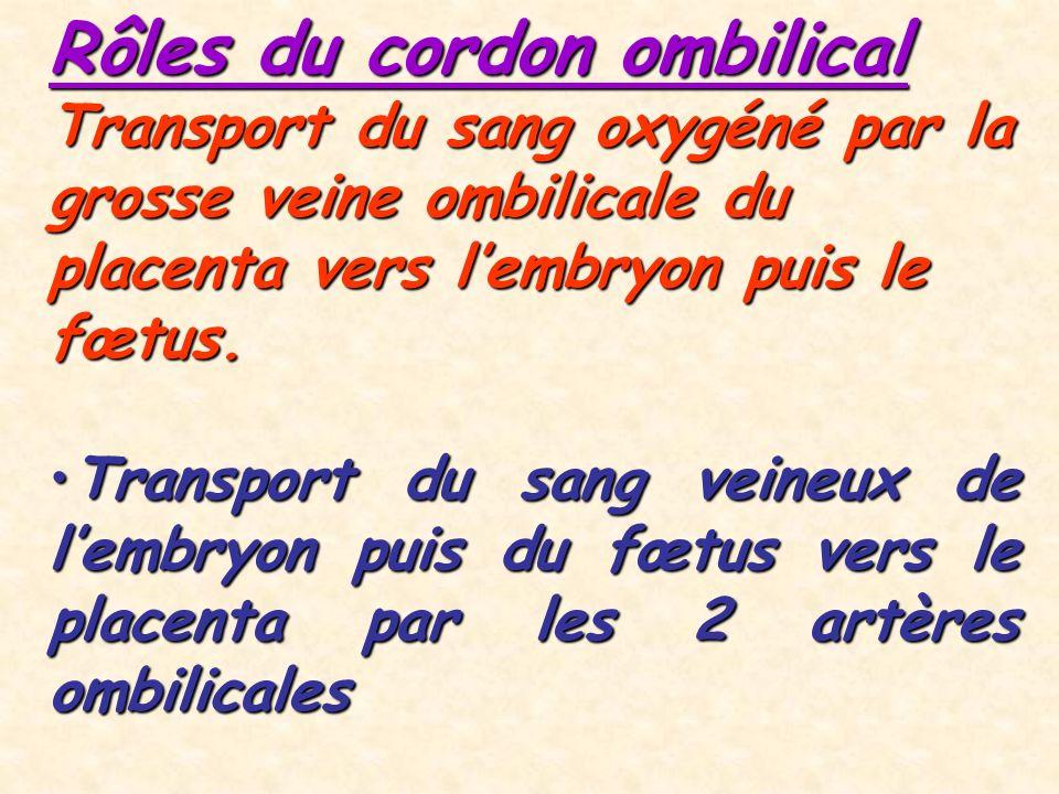 Rôles du cordon ombilical Transport du sang oxygéné par la grosse veine ombilicale du placenta vers lembryon puis le fœtus.