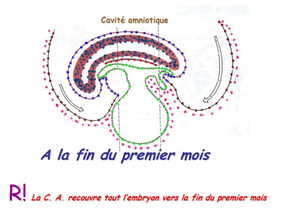 A la fin du premier mois Cavité amniotique R.La C.