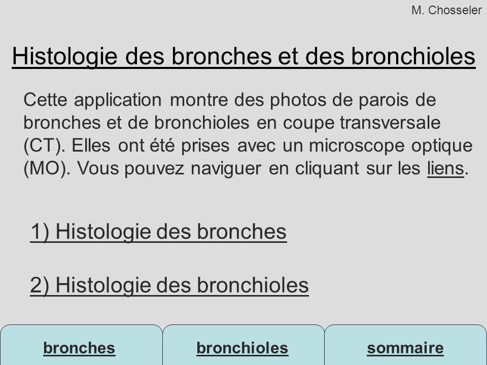 bronchesbronchioles sommaire Histologie des bronches et des bronchioles 1) Histologie des bronches 2) Histologie des bronchioles Cette application mon