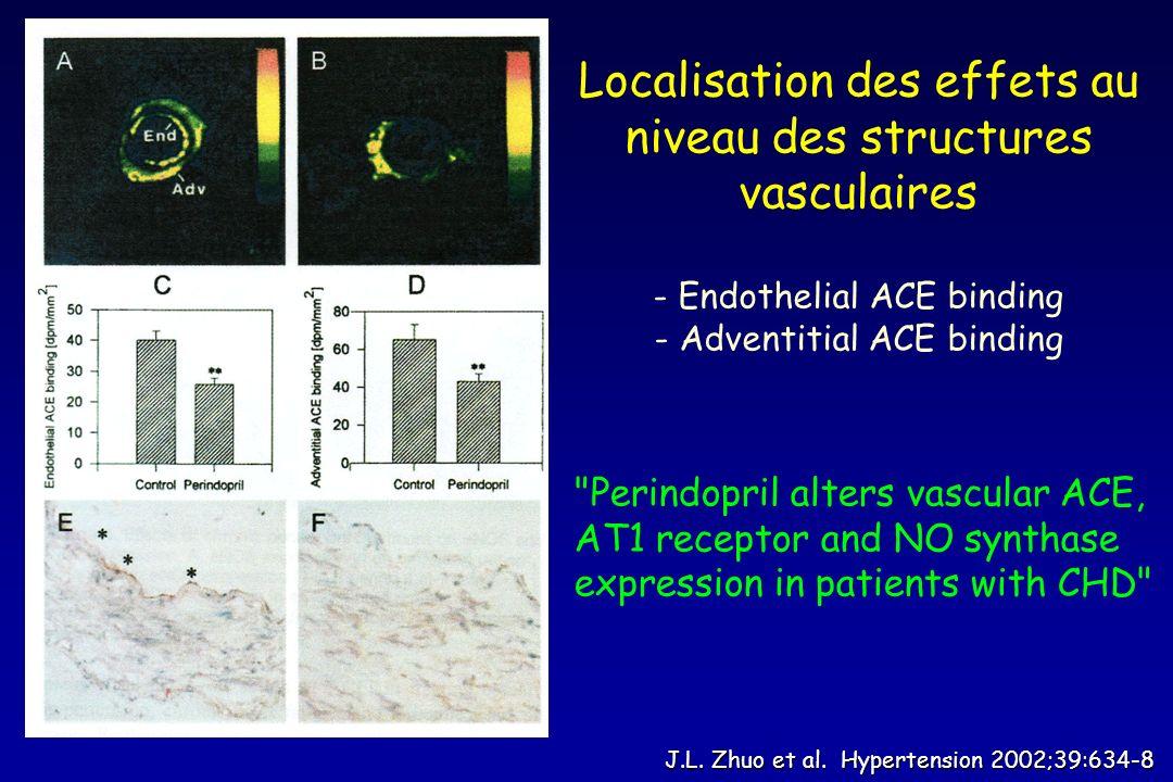 J.L. Zhuo et al. Hypertension 2002;39:634-8 Localisation des effets au niveau des structures vasculaires - Endothelial ACE binding - Adventitial ACE b