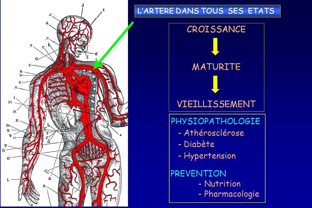 LARTERE DANS TOUS SES ETATS PHYSIOPATHOLOGIE -Athérosclérose -Diabète -Hypertension PREVENTION - Nutrition - Pharmacologie