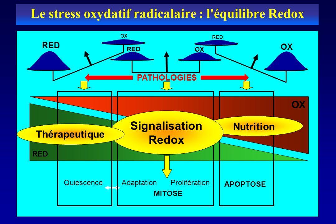 RED OX RED OX QuiescenceAdaptationProlifération APOPTOSE Nutrition Signalisation Redox OX RED Thérapeutique PATHOLOGIES MITOSE Le stress oxydatif radi
