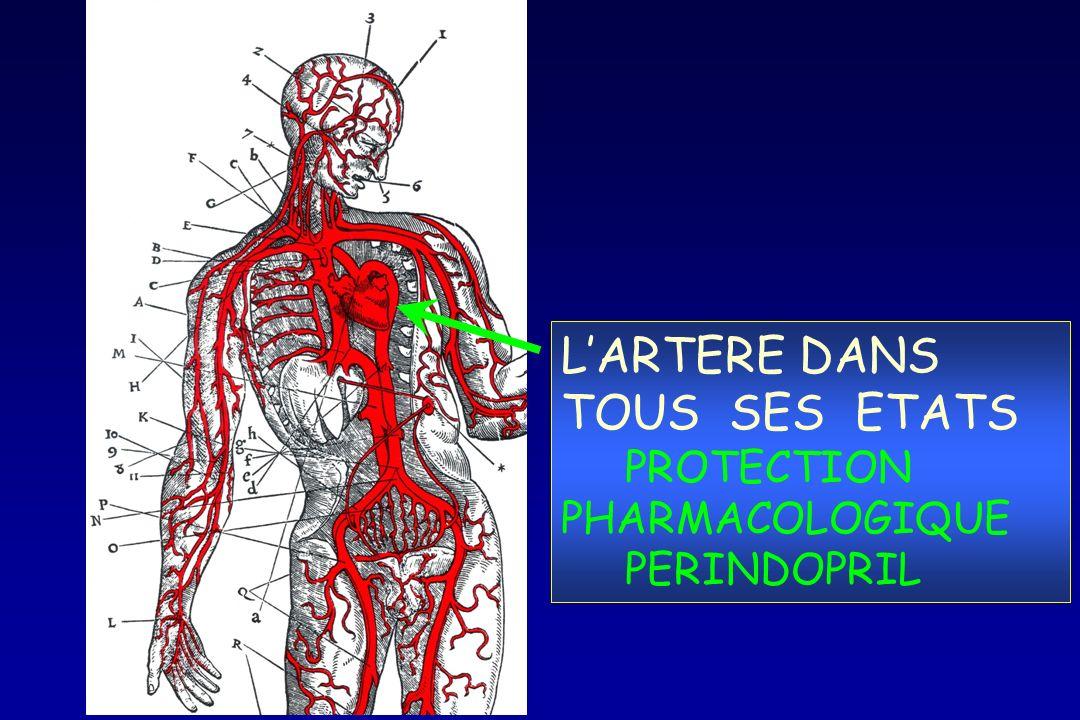 LARTERE DANS TOUS SES ETATS PROTECTION PHARMACOLOGIQUE PERINDOPRIL