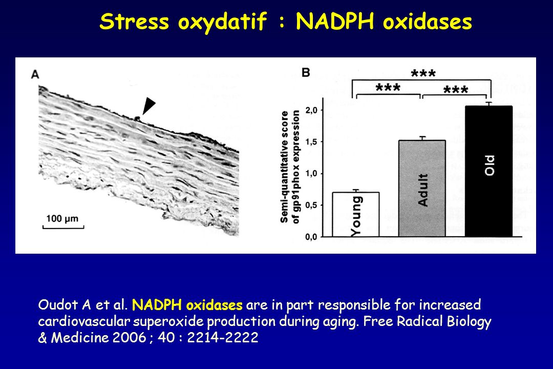 Oudot A et al. NADPH oxidases are in part responsible for increased cardiovascular superoxide production during aging. Free Radical Biology & Medicine