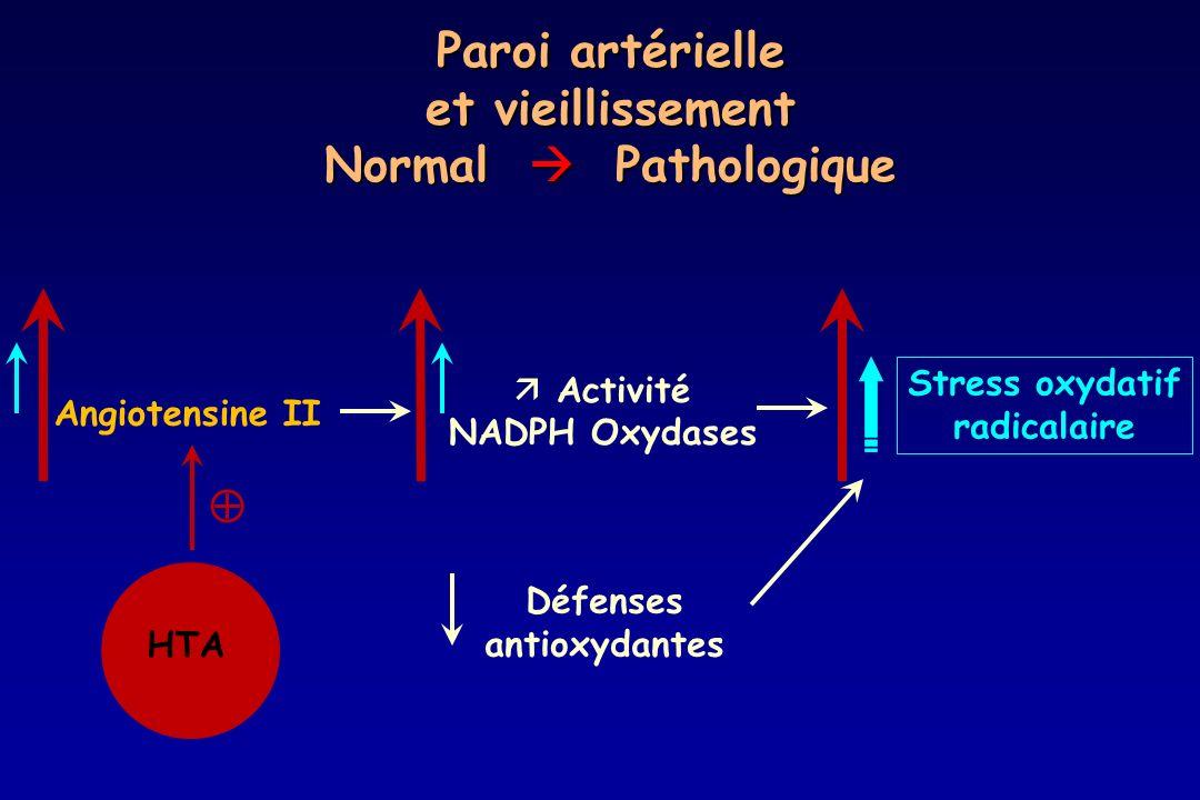 Paroi artérielle et vieillissement Normal Pathologique Angiotensine II Activité NADPH Oxydases Stress oxydatif radicalaire Défenses antioxydantes HTA
