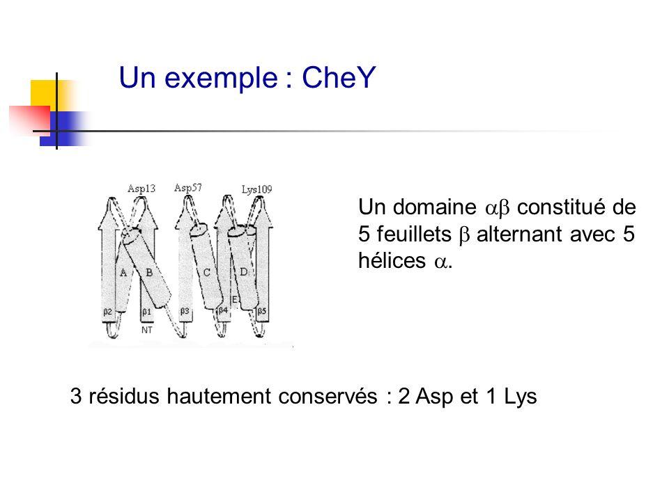 Un exemple : CheY Un domaine constitué de 5 feuillets alternant avec 5 hélices. 3 résidus hautement conservés : 2 Asp et 1 Lys