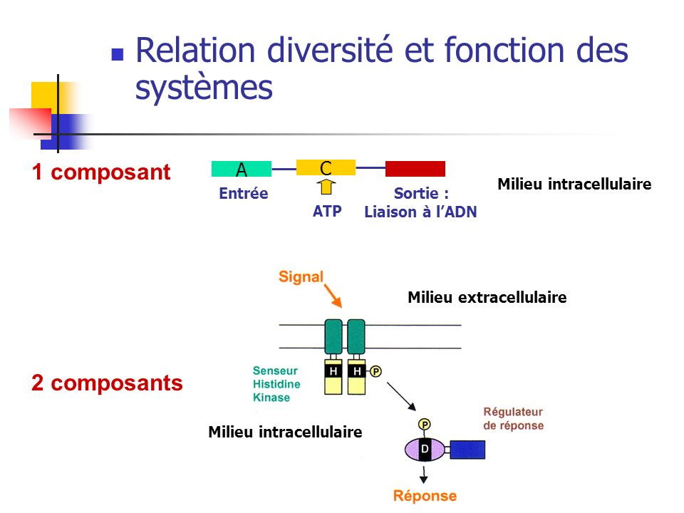 Milieu intracellulaire A Entrée Sortie : Liaison à lADN C ATP Milieu intracellulaire Milieu extracellulaire 1 composant 2 composants Relation diversit