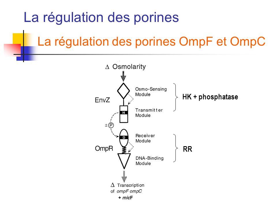 La régulation des porines La régulation des porines OmpF et OmpC HK + phosphatase RR + micF