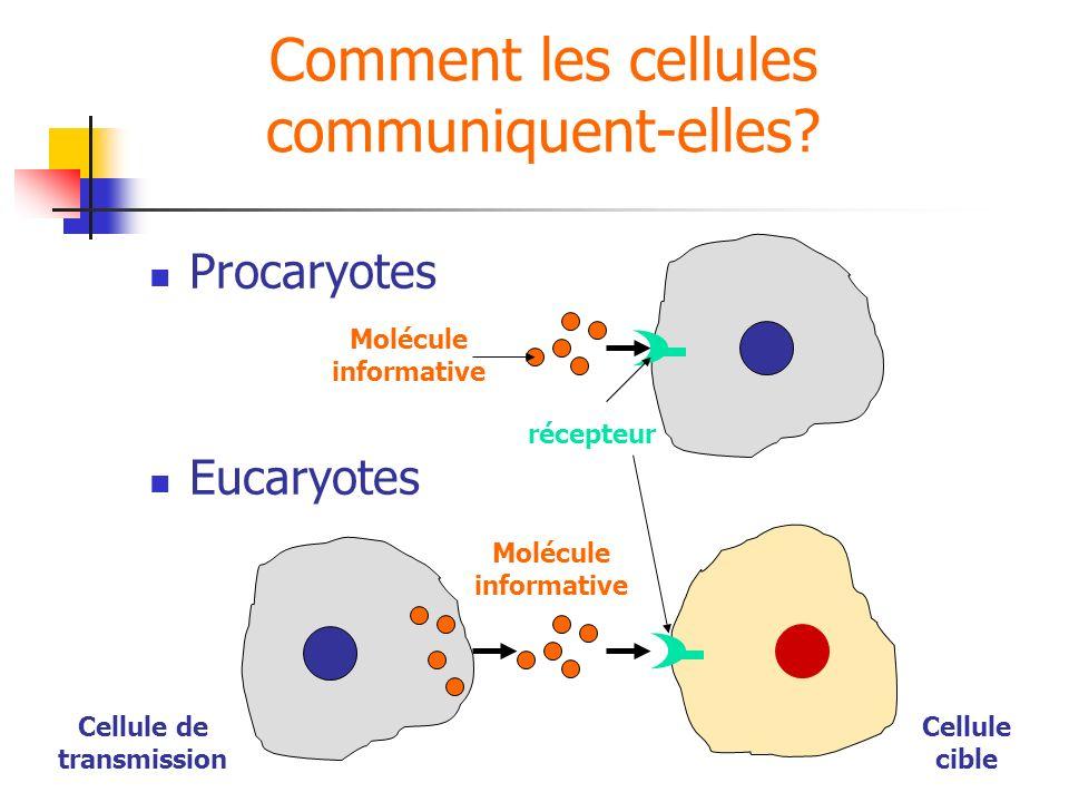 Comment les cellules communiquent-elles? Procaryotes Eucaryotes Molécule informative récepteur Cellule de transmission Cellule cible Molécule informat