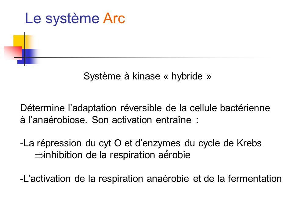 Le système Arc Système à kinase « hybride » Détermine ladaptation réversible de la cellule bactérienne à lanaérobiose. Son activation entraîne: -La ré
