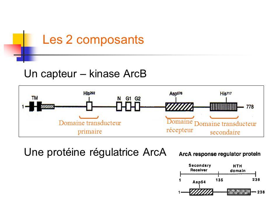 Un capteur – kinase ArcB Une protéine régulatrice ArcA Domaine transducteur primaire Domaine récepteur Domaine transducteur secondaire Les 2 composant