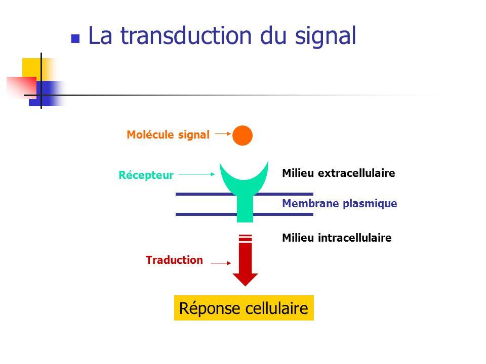 Réponse cellulaire Milieu extracellulaire Membrane plasmique Milieu intracellulaire Molécule signal La transduction du signal Récepteur Traduction