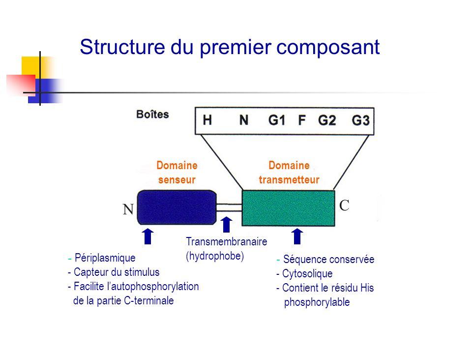 Structure du premier composant - Périplasmique - Capteur du stimulus - Facilite lautophosphorylation de la partie C-terminale Transmembranaire (hydrop