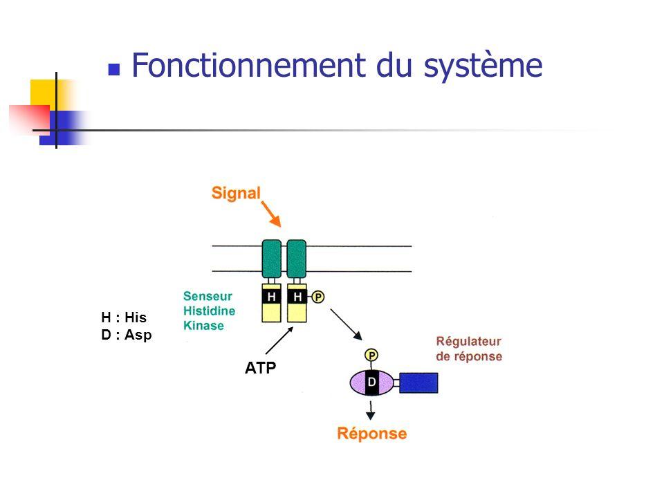 Fonctionnement du système H : His D : Asp ATP