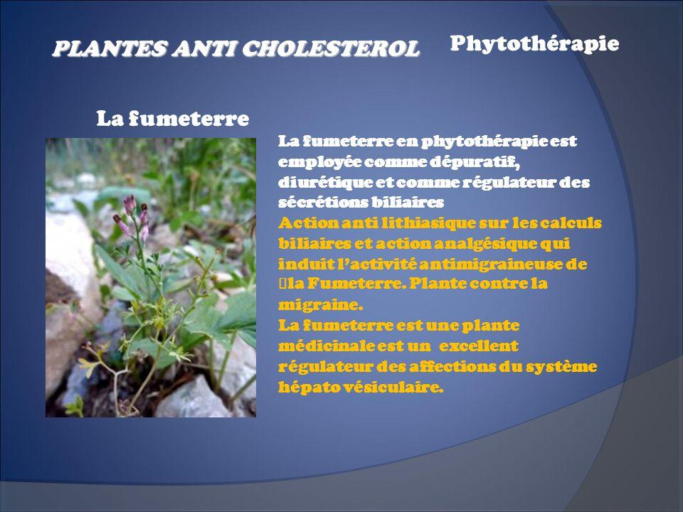 La fumeterre en phytothérapie est employée comme dépuratif, diurétique et comme régulateur des sécrétions biliaires Action anti lithiasique sur les ca