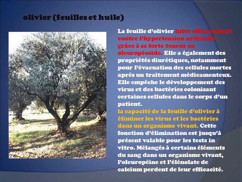 olivier (feuilles et huile) La feuille dolivier lutte efficacement contre lhypertension artérielle grâce à sa forte teneur en oleuropéoside. Elle a ég