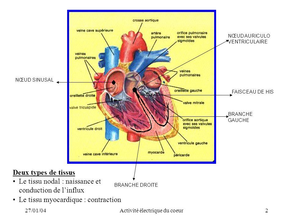 27/01/04Activité électrique du coeur2 Deux types de tissus Le tissu nodal : naissance et conduction de linflux Le tissu myocardique : contraction BRAN