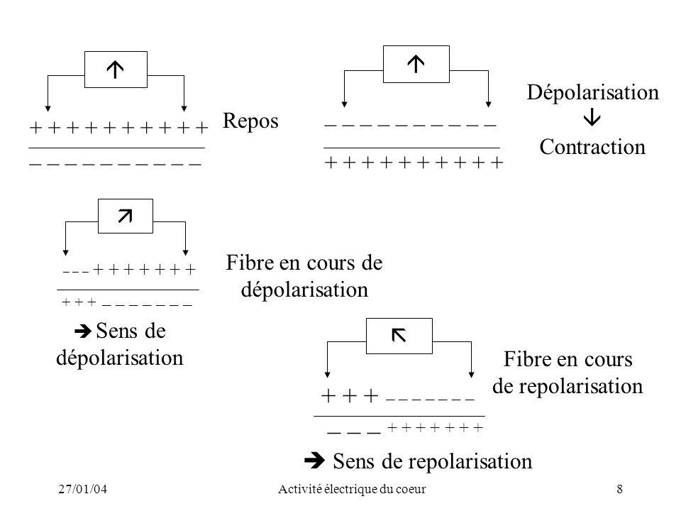 27/01/04Activité électrique du coeur8 Repos Dépolarisation Contraction + + + + + _ _ _ _ _ + + + + + _ _ _ _ _ _ _ _ + + + + + + + + + + _ _ _ _ _ _ _