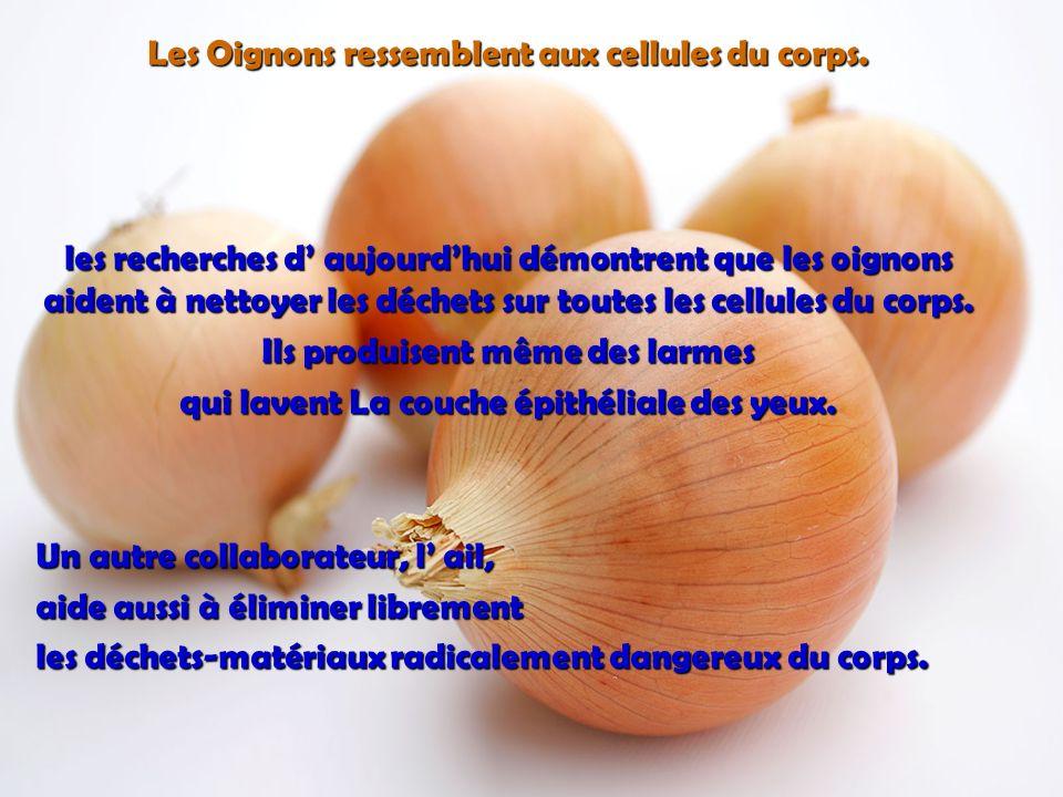 LOrange, le pamplemousse et les autres fruits citriques ressemblent aux glandes des seins chez les femmes… Ils stimulent la santé des seins et le mouv